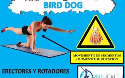 Analizando el «Bird Dog»