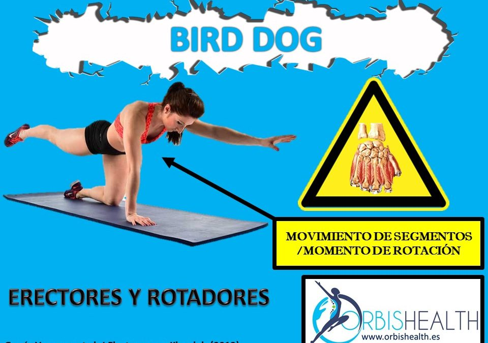Analizando el «Bird Dog»